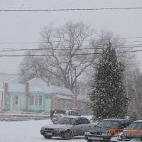 Ёлка и снег.Б-Долина, Великодолининское
