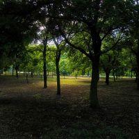 в парке, Килия