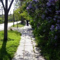 Килия, Осипенко с сайта - www.kiliya.net, Килия