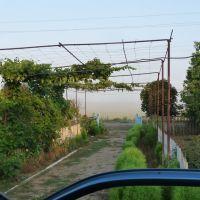 туман летним утром, Николаевка