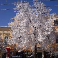 Узорчатое дерево, Одесса