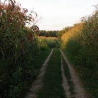 Кукуруза, Саврань