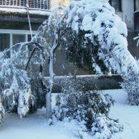 Зима 2, Татарбунары