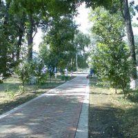 Центральна Алея в Парку, Фрунзовка
