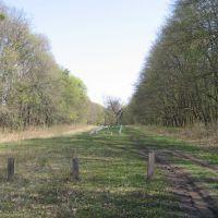 Кочубеевские дубы, Диканька