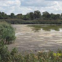 Озеро после жаркого лета, Карловка