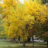 Машівка  осінь, Машевка