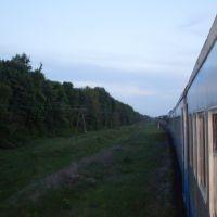 поезд гребёнка шевченко последовал станцию оржица, Оржица