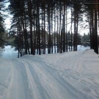 в лесу, Комсомольск