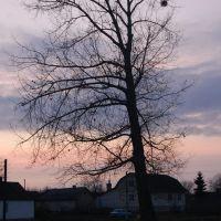 Дерево на фоні осіннього неба. Tree against the background of the autumn sky., Демидовка