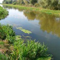 Сброс местными неочищенных стоков в реку, Дубно