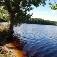 Bloody red water on the Chernoe Lake, Заречное