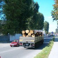 Везуть ліс..., Костополь