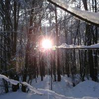 Сонце на гілці, Костополь