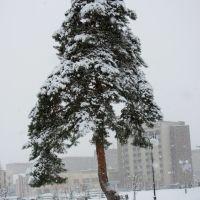 В снежной шубке.г. Кузнецовск., Кузнецовск