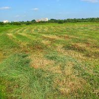 Валки скошенной травы., Кузнецовск