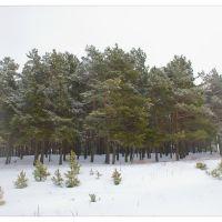 Winter pictures ..., Кузнецовск