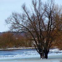 Прилетели утки...холодно...., Кузнецовск