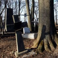 CROSS and TREE, Ровно