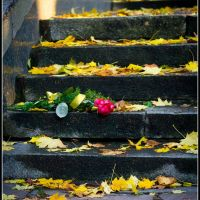 Abandoned bouquet..., Ровно
