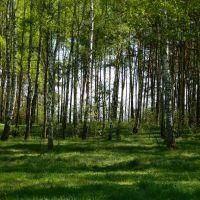 Ліс, Сарны