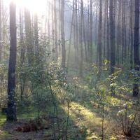 Ранковий ліс, Червоноармейск