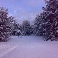 Засніжена лісова дорог, Червоноармейск