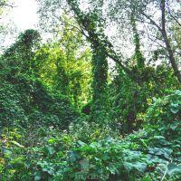 greenbushes, Ахтырка