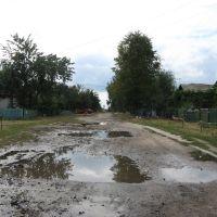 После дождя (улица 40 лет Победы), Воронеж
