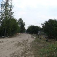 Улица 40 лет Победы (вид со стороны Араратов), Воронеж