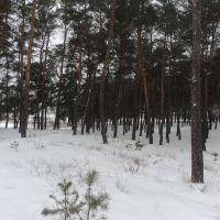 Ліс взимку, Кириковка