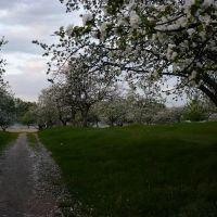 Кандибина...весенный сад..., Конотоп