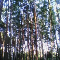 лес, Недригайлов