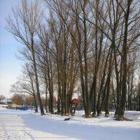 Деревья, Недригайлов