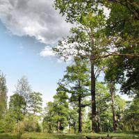 Приграничный лес, Середина-Буда