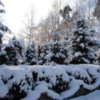 Возле лесничества зимой, Тростянец