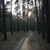 follow the path, Тростянец