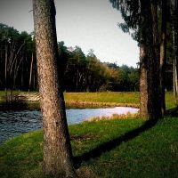 Нескучный лес, Тростянец