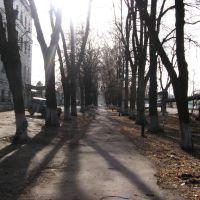 Аллея на ул.Ленина, Шостка
