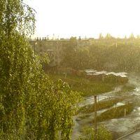 Мой двор, дождь, Шостка