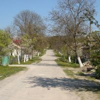 Chornovola street, Борщев