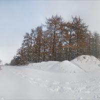 Палуба лісу, Заложцы