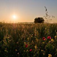 Сонця схід, Заложцы