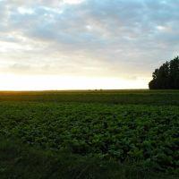 Beautiful view, Козлов