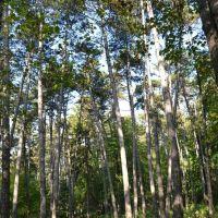 Лісова алея, Теребовля