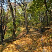 Осень ранняя, Теребовля