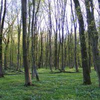 Весна, Шумское