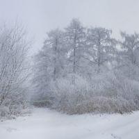 Вкриті інієм дерева Ромахового лісу, Шумское
