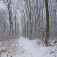 Казка зимового лісу, Шумское