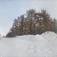 Палуба лісу, Шумское